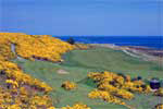 Scotland - Royal Dornoch Golf Club, northernmost of the world's top twenty golf courses. Famed golf course architect, Donald Ross, was born in Dornoch and learned his trade on these links. Many of his favourite design features are found in this wonderfully natural golf course. Little wonder that, among Scottish courses, only St. Andrews and Muirfield are rated higher.