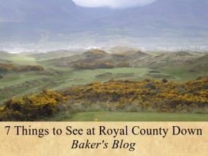 RCD-Blog